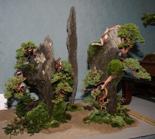 Bonsai 894 - bonsaipaterna