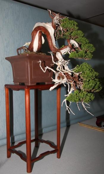 Bonsai 902 - bonsaipaterna