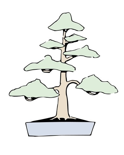 Bonsai CHOKKAN - Vertical formal - Ilustraciones
