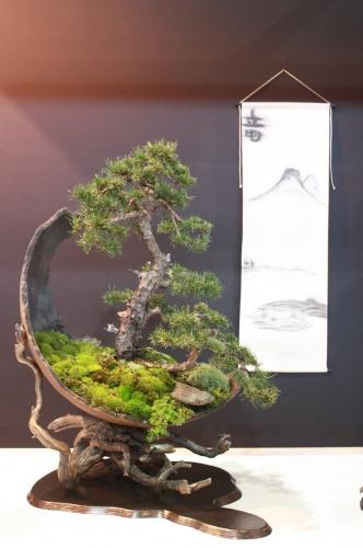 Bonsai Pinus Sylvestris - Carlos Brandâo - EBA Lorca