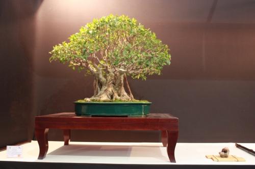 Bonsai Ficus Retusa - Salvador de los Reyes - EBA Lorca