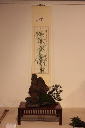 Bonsai Juniperus Chinensis - CBALICANTE