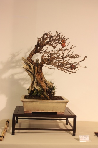 Bonsai Punica Granatum Nejikan Juan Ortega - CBALICANTE