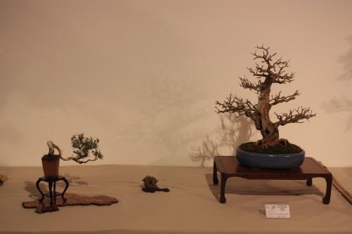 Bonsai Granado, Romero y Planta de Acento de Miguel Alonso - CBALICANTE