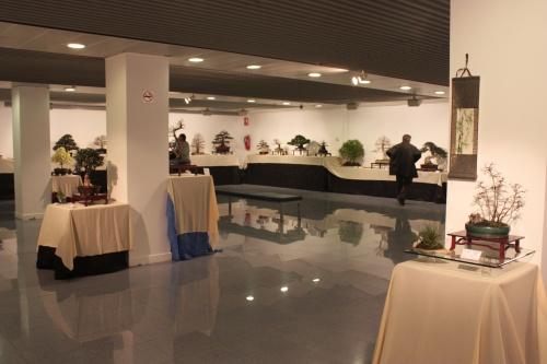 Bonsai Sala exposiciones 1 - CBALICANTE