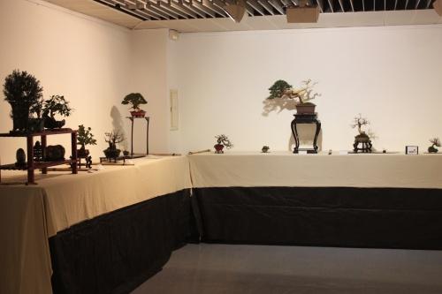 Bonsai Sala Exposiciones 5 - CBALICANTE