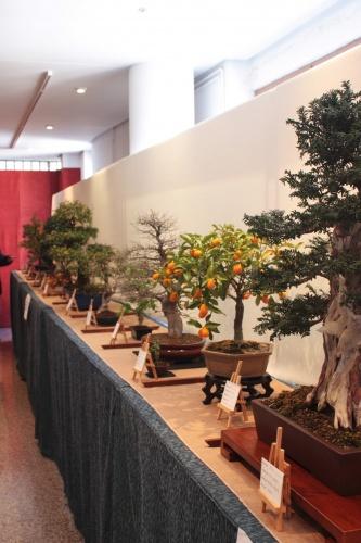 Bonsai Otra vista de la exposición - Assoc. Bonsai Muro