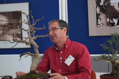 Bonsai Jose Gomez del Rio con una Higuera - Bonsai Oriol