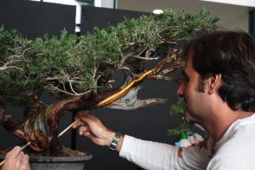 Bonsai Pintando madera - Bonsai Oriol