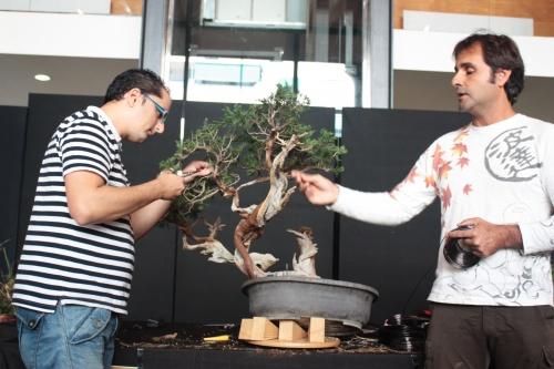Bonsai Como hacer la Primera formacion - Bonsai Oriol