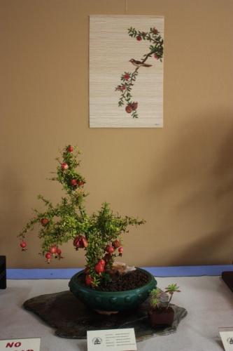 Bonsai Punica Granatum - Assoc. Bonsai Cocentaina