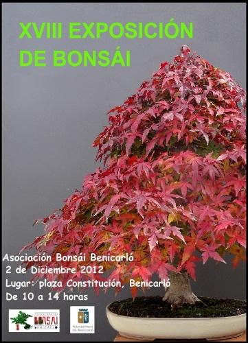 Bonsai XVIII Exposicion de Bonsai Benicarlo - eventos