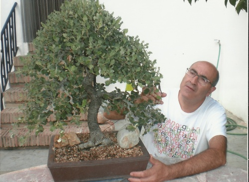 Bonsai 11398 - vicente solbes