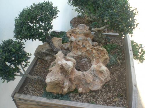 Bonsai 11474 - vicente solbes