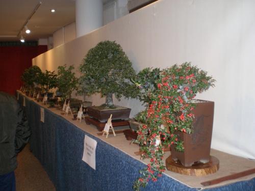 Bonsai 12306 - vicente solbes