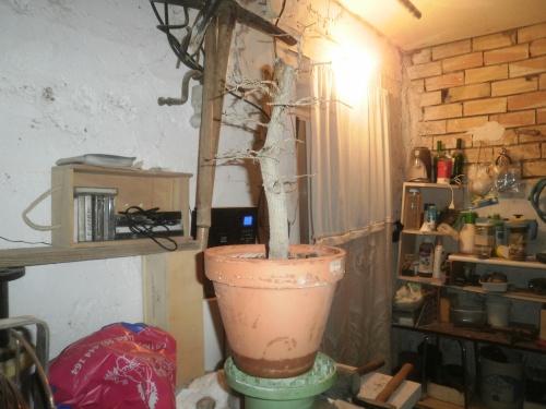 Bonsai Granado esqueje de mayo del 2013 - SARRUT
