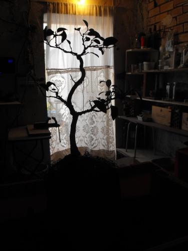 Bonsai ficus trasplante 2016 - SARRUT