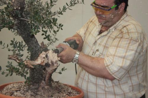 Trabajar bonsái con Dremel