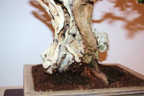 Bonsai Detalles de tronco Bonsai Granado - CBALICANTE