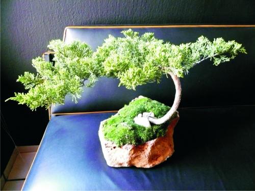 Un reto en mi vida, el primer bonsai !!
