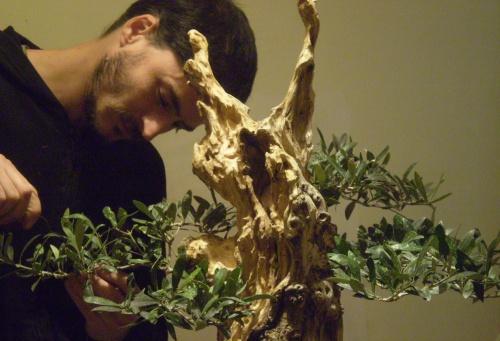 Bonsai ALAMBRANDO EN MI TALLER - Andres Bicocca