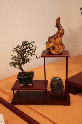 Bonsai Pequeño Mame con un cotoneaster - Assoc. Bonsai Muro