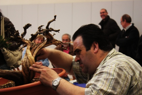 Bonsai Antonio Torres sigue limpiando - torrevejense