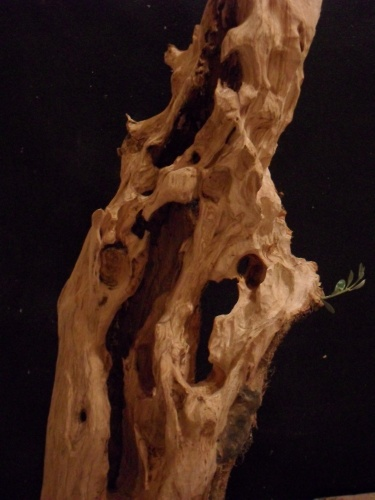 Bonsai detalle - Andres Bicocca