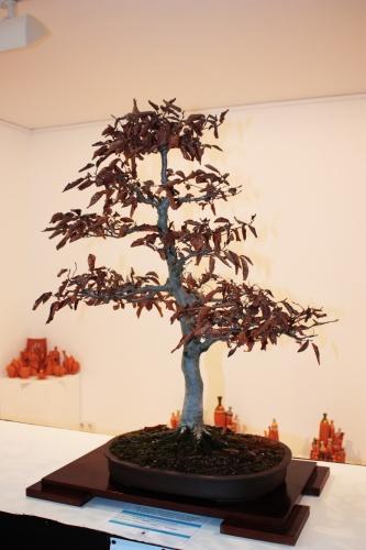 Bonsai Carpe bonsai, Ontiyent, Francisco Muñoz - torrevejense