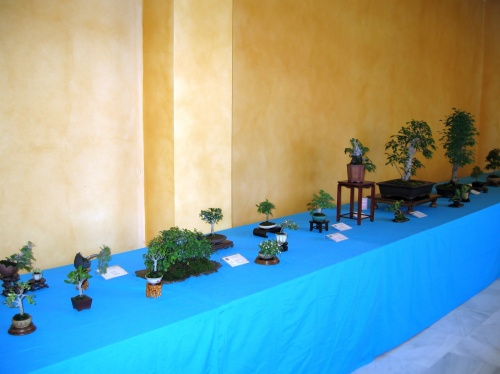Bonsai II MUESTRA DE BONSÁI Ciudad de Málaga 2010 - josegoderi