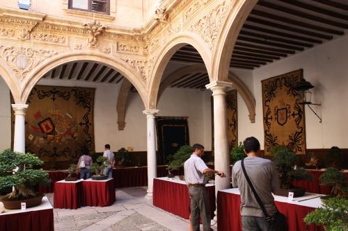 Bonsai Aficionados al bonsai en el Palacio de Guevara - Lorca 2010 - Amigos del Bonsai Lorca