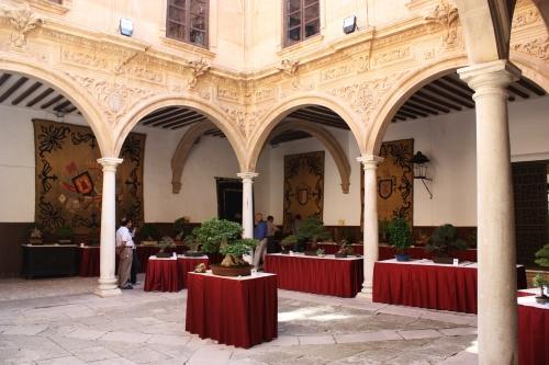 Bonsai Columnas del Palacio de Guevara - Amigos del Bonsai Lorca