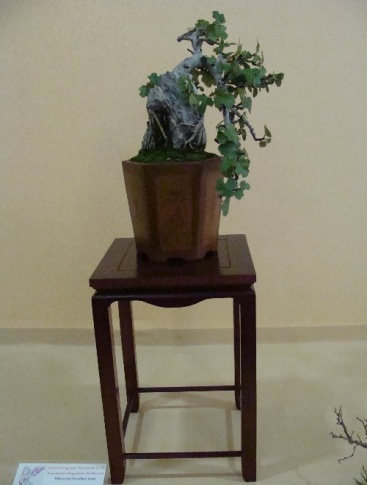 Bonsai Higuera - Vila-real