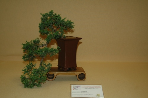 Bonsai Junipero, Jose Vte. Monton - aebonsai