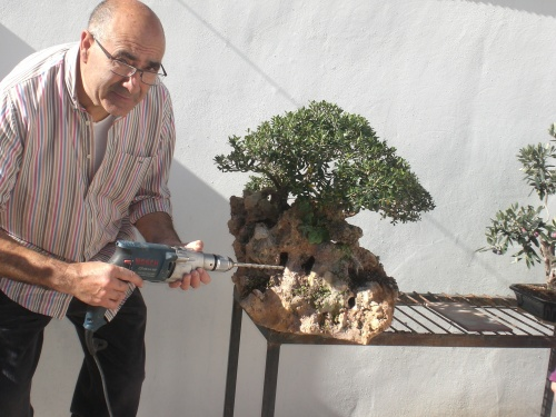 Bonsai Agujerear la piedra, para el dia de mañana, bajen las raices[#Sin Título#] - vicente solbes