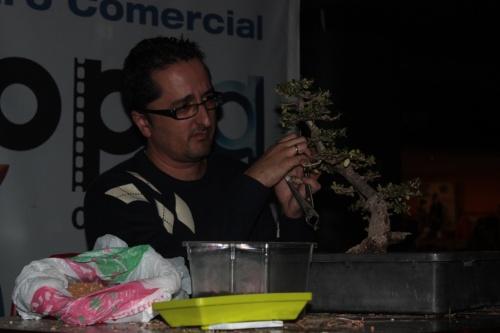 Bonsai Demostración de Alvaro Vinal sobre un Acebuche - Bonsai Oriol