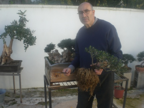 Bonsai 9974 - vicente solbes