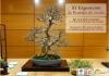 Cartel XI Exposicion de bonsai de otoño - Cordoba