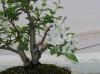 Manzano everest